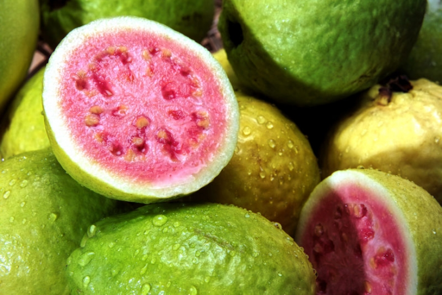 Guava improves vision